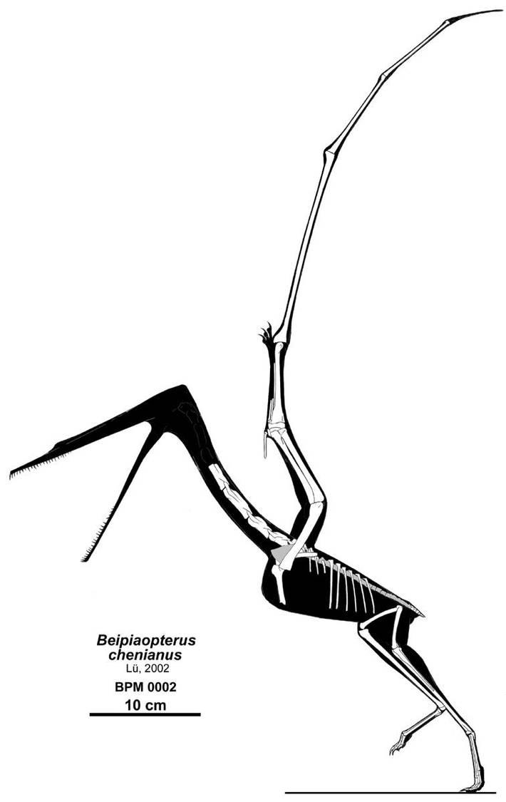The Crane Pterosaur? by Qilong