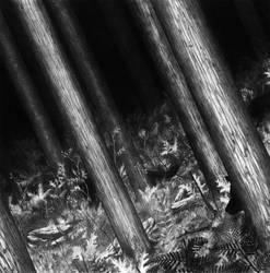 Wolfpack by Daandric