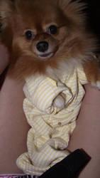 Puppy Baby by FruitloopQueen