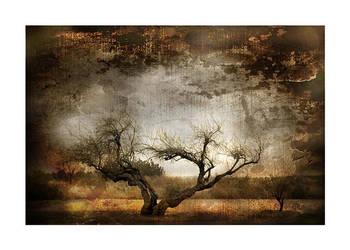 Magic trees of broceliande I by ChristineAmat