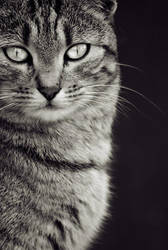 Feline by ChristineAmat