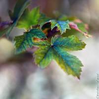 Nature nacree by ChristineAmat
