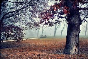 Dans le brouillard... by ChristineAmat