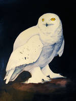 Snowy Owl by heylorlass