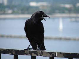 Bird 005 by MonsterBrand-stock