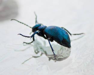 Blue Beetle 1 by tinfoilmedia