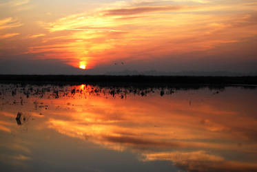 vivid sunset by toshiami