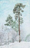 Snowy dream by Vincik