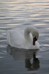 Swan 1 by Etherick