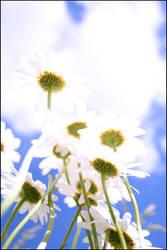 Summer flowers by Mejjad