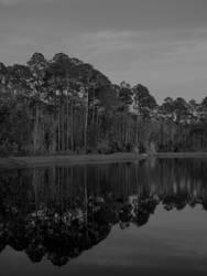 Pond by PlaguedPhantom