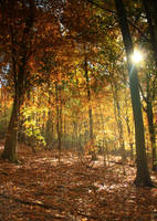 Colorful Forest 12 by bean-stock