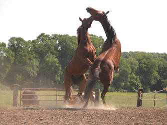 Rearing Horse Stock 4 by StridingStrong-Stock