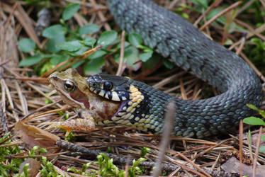 Dinner of the Grass Snake by ziezula