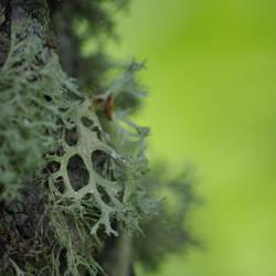 Moss Green by ziezula