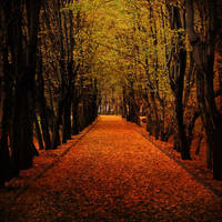 Autumnal Alley by drkshp