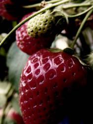 Dark strawberries by SophieBrook