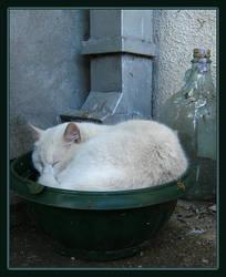 Drunken cat by Arimana