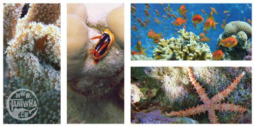 Red Sea by Dayu