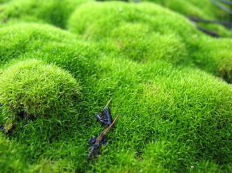 moss by minniemouse666