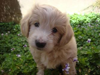 cuteness by majestic-angel