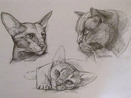 Sketching,  cats by LomovtsevaOlga