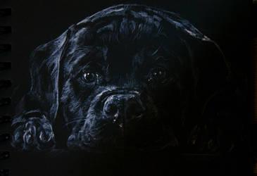 Sad dog, white pencil by LomovtsevaOlga