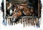 Horse, watercolor by LomovtsevaOlga