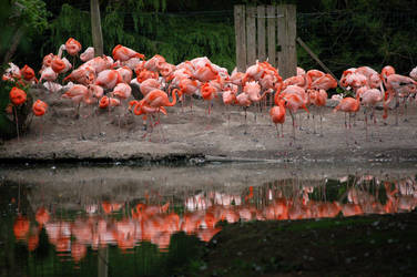 Flamingos by sicklittlemonkey
