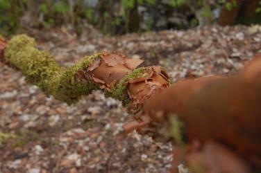 Mossy branch by sicklittlemonkey