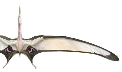 Nyctosaurus gracilis (male) by GaffaMondo