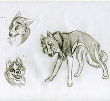 Flash the Husky by KasaraWolf