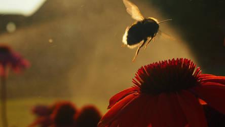 A Lost Bumblebee by JuicyLung