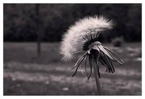 Illusion and Dream by JordanRobin