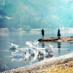 Les cygnes sur le fleuve by Felipa-de-Noailles