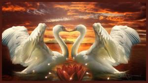 Love birds by annemaria48