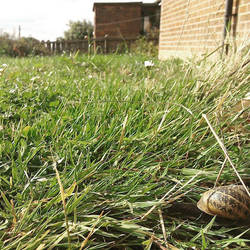 Beauty of snails hiding place by holster262