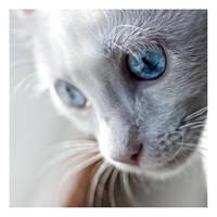eye into mine by ladyshave