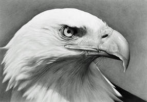 Bald Eagle by CubistPanther