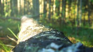 Fallen Log by RockLou