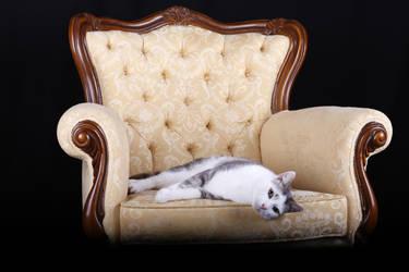 Posh Kitty by StephieDwn