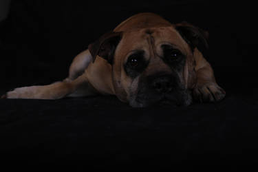 Hugo Pup by StephieDwn