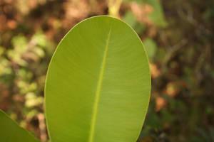 leaves 3 by kakutogi