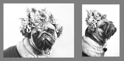 New incarnation of Frida Kahlo... by gosiaa93