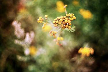 Zapach lata... by gosiaa93