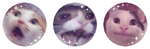 F2U meme cats divider by Dogdairy