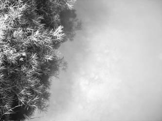 Eerie Lake by davetolomy