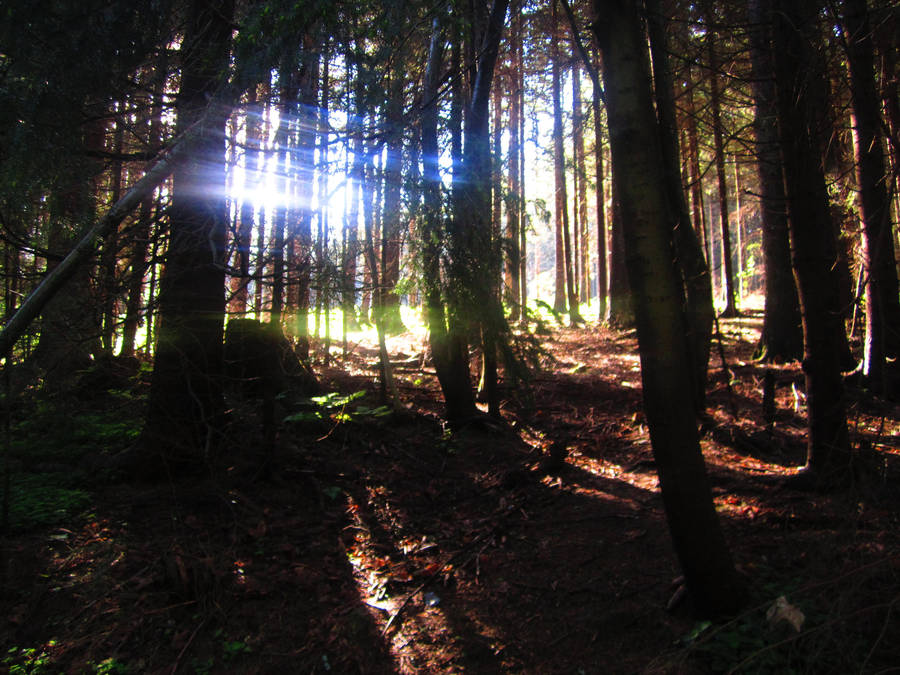 Light in the forest by Jabberworks
