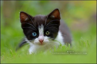 Little cat by Tiefenschaerfe