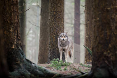 In the woods by Tiefenschaerfe